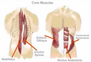 musculos del core para fortalecer columna